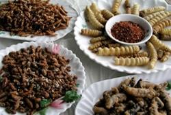 Un menú de gusanos, hormigas y alacranes